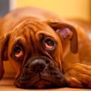 Best Flooring For Dogs: Top 9 Revealed